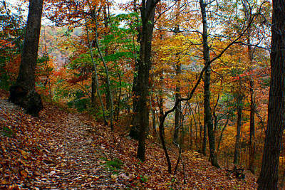 Photograph - Ozark Woods by Jon Emery