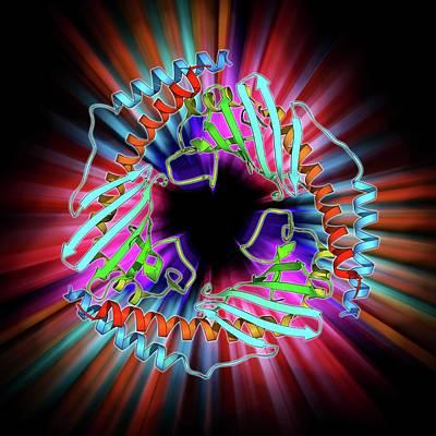 P32 Mitochondrial Matrix Protein Art Print by Laguna Design