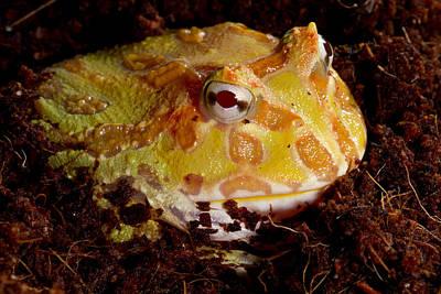 Pac Man Frog Art Print