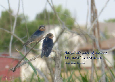 Lovebird Digital Art - Pace Of Nature by Lori Tews