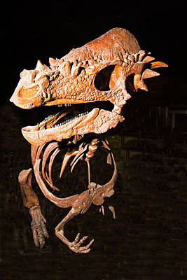 Photograph - Pachycephalosaurus by Millard H. Sharp