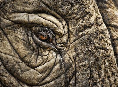 Pachyderm Skin Art Print by Daniel Hagerman