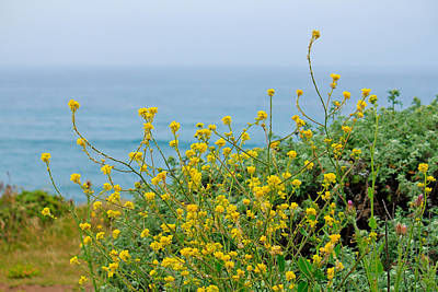 Photograph - Pacific Coast Florals by Kathy Nairn