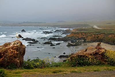 Photograph - Pacific Coast Natives by Kathy Nairn