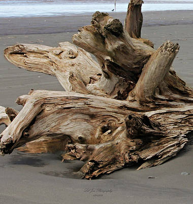 Photograph - Pacific Driftwood II by Jeanette C Landstrom