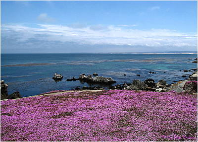 Print featuring the photograph Pacific Grove California by Joyce Dickens