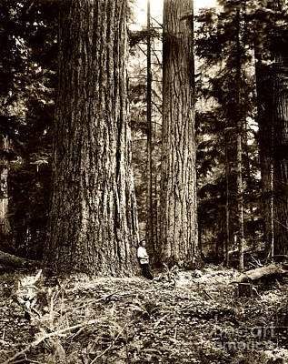 Photograph - Pacific Old Growth Forest by Joe Jeffers