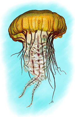 Photograph - Pacific Sea Nettle Jellyfish by Roger Hall