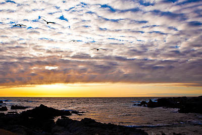 Photograph - Pacific Sunset by Melinda Ledsome