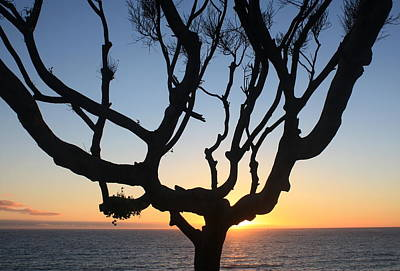 Pacific Tree Sunset Art Print