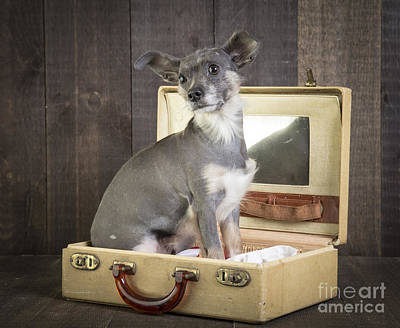 Cute Puppy Photograph - Packed And Ready To Go by Edward Fielding