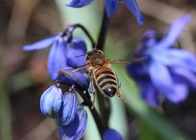 Photograph - Packin Blue Pollen by Lucinda VanVleck