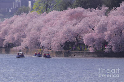 Photograph - Paddle Boats Passing Dc Cherry Blossoms by Jeff at JSJ Photography