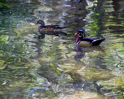 Photograph - Paddling In A Monet by Judy Wanamaker