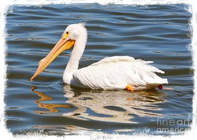 Photograph - Paddling White Pelican With Border by Carol Groenen