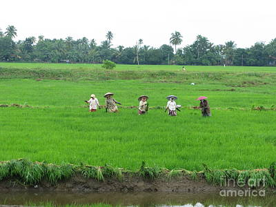 Paddy Field Workers Art Print