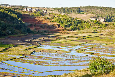 Photograph - Paddy Fields And Terraces Madagascar by Liz Leyden