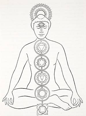 Meditation Drawing - Padmasana Or Lotus Position by English School