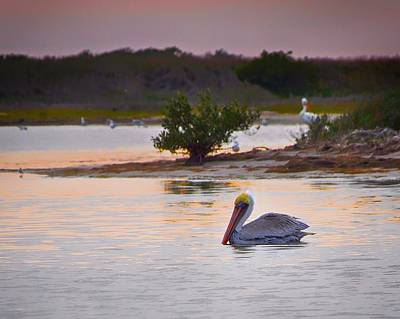 Photograph - Padre Island Pelican by Kristina Deane
