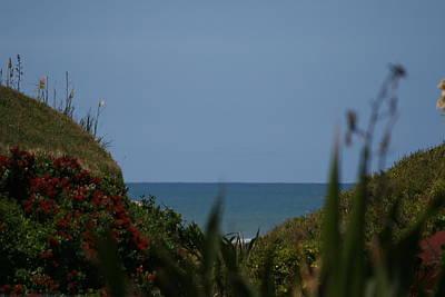 Photograph - Pahutakawa Tree And Sea by Phoenix De Vries