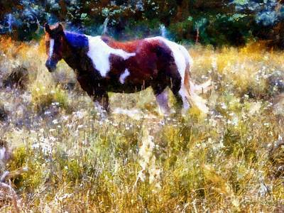 Paint Horse Digital Art - Paint Horse In Summer Pastures by Janine Riley