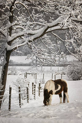 Horse Snow Photograph - Paint In The Snow by Lori Deiter