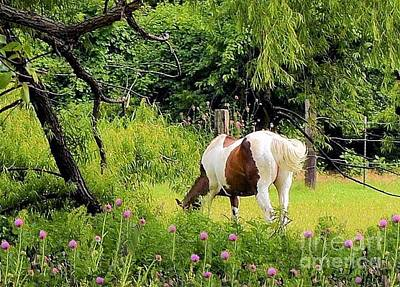 Photograph - Paint Horse Grazing  by Janette Boyd