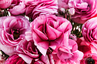 Photograph - Paint Me Pink Ranunculus Flowers By Diana Sainz by Diana Raquel Sainz