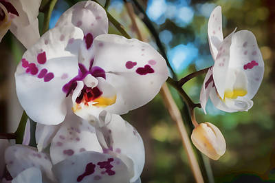 Photograph - Paint Spattered Orchid Phalaenopsis by Rich Franco