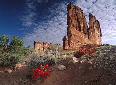 Photograph - Paintbrush And The Organ Rock by Tim Fitzharris