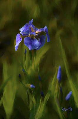 Photograph - Painted Alaskan Wild Irises by Penny Lisowski
