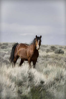 Wild Horse Photograph - Painted Battle Scarred by Wes and Dotty Weber