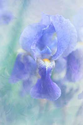 Photograph - Painted Blue Iris by Jenny Rainbow