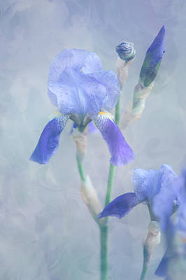 Photograph - Painted Blue Irises. Vertical by Jenny Rainbow