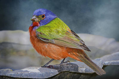 Bunting Photograph - Painted Bunting In April by Bonnie Barry
