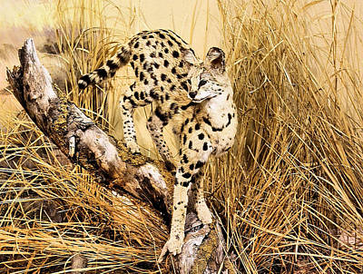 Photograph - Painted Cheetah by Kristin Elmquist
