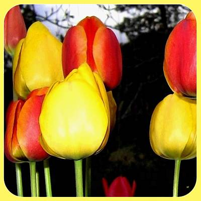 Digital Art - Painted Country Tulips by Will Borden