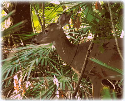 Photograph - Painted Doe 1 by Sheri McLeroy
