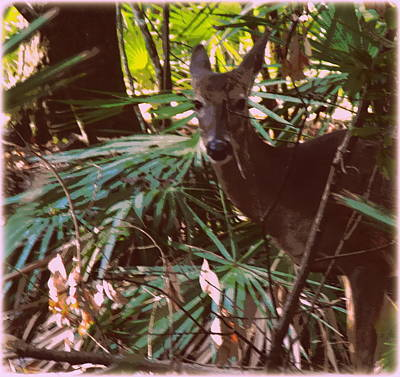 Photograph - Painted Doe 2 by Sheri McLeroy