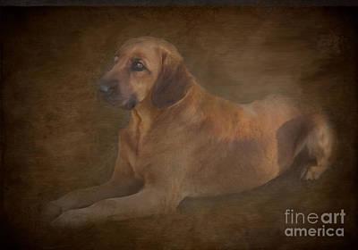 Best Friend Photograph - Painted Dog by Jim  Hatch