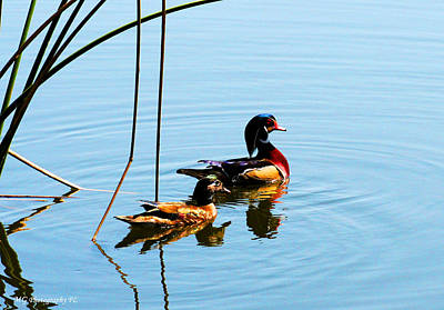 Photograph - Painted Ducks by Marty Gayler