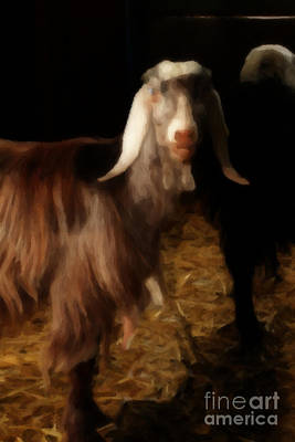 Animal Portraiture Mixed Media - Painted Egyptian Goat by Doc Braham