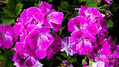 Photograph - Painted Geraniums by Lena Auxier
