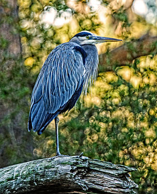 Photograph - Painted Great Blue Heron by Lara Ellis