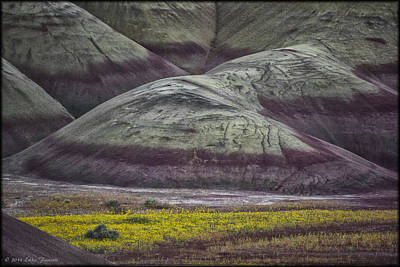 Photograph - Painted Hills Bloom by Erika Fawcett
