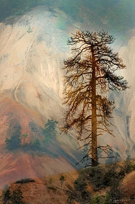 Photograph - Painted Hills Sentinel by Kasandra Sproson