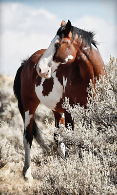 Photograph - Painted Horse by Athena Mckinzie