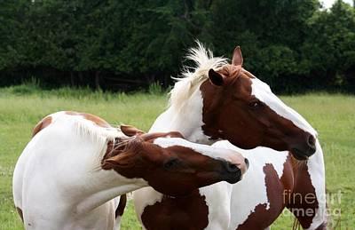 Cowboy Photograph - Painted Horses - Photography By Valentina Miletic by Valentina Miletic