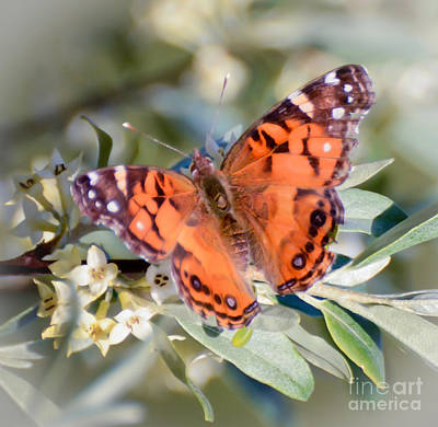 Virginia Butterfly Photograph - Painted Lady Butterfly by Kerri Farley