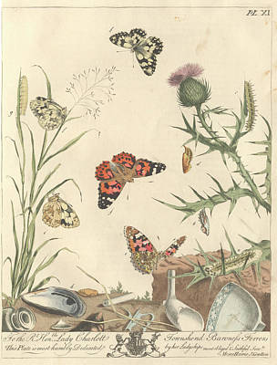 Vanessa Wall Art - Photograph - Painted Lady Butterfly by Natural History Museum, London/science Photo Library